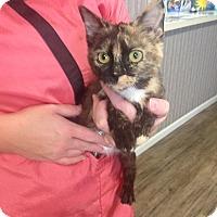 Adopt A Pet :: Sweetie PIe - Shelbyville, TN