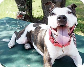 Pit Bull Terrier Mix Dog for adoption in Austin, Texas - Olive