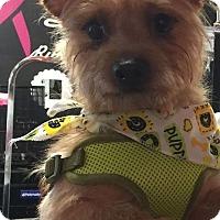 Adopt A Pet :: Smokey-Fostered - Rustburg, VA