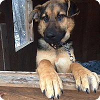 Adopt A Pet :: CHEVY - Winnipeg, MB