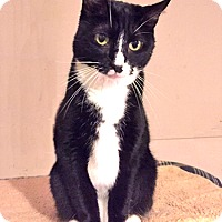 Adopt A Pet :: Twinkle - Youngsville, NC