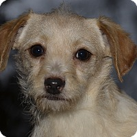Adopt A Pet :: Archie - adoption pending - Pleasanton, CA