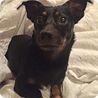 Adopt A Pet :: Ernie in Texarkana, TX - Texarkana, TX
