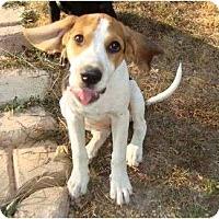 Adopt A Pet :: Daisy Loo - P, ME
