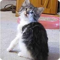 Adopt A Pet :: Maxwell & Michelle - Alexandria, VA