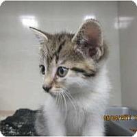 Adopt A Pet :: Laverne - Sterling Hgts, MI