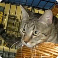 Adopt A Pet :: Sydney - Dallas, TX