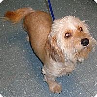 Adopt A Pet :: Nena - Orlando, FL
