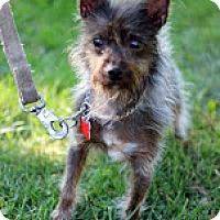Adopt A Pet :: Myra - Tinton Falls, NJ