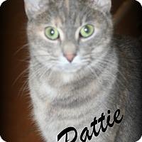 Adopt A Pet :: Pattie - Salem, OH