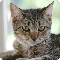 Adopt A Pet :: Dumbo - North Fort Myers, FL