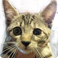 Adopt A Pet :: Chloe - Seneca, SC