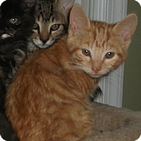 Adopt A Pet :: Lilo - Colmar, PA