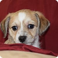Adopt A Pet :: HUCK - Nashville, TN