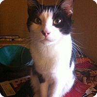 Adopt A Pet :: Zeus (M) - Orlando, FL