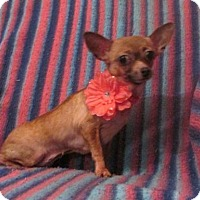 Adopt A Pet :: CHARM - WOODSFIELD, OH