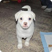 Adopt A Pet :: Polar Bear - Grand Rapids, MI