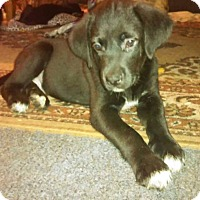 Adopt A Pet :: Seamus - Charlestown, RI
