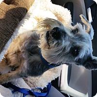 Adopt A Pet :: FERGIE (SRC#1796) IN NC - Lenoir, NC