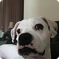 Adopt A Pet :: Dixie - Plant City, FL
