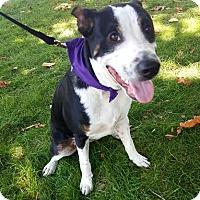 Adopt A Pet :: Miso - Detroit, MI