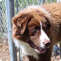 Adopt A Pet :: Misha - Harmony, Glocester, RI