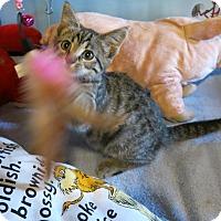 Adopt A Pet :: Kansas - Geneseo, IL