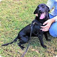 Adopt A Pet :: Sydnee - Falls Church, VA