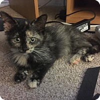 Adopt A Pet :: Portia - Denver, CO