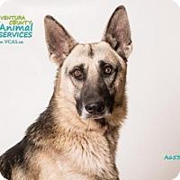 German Shepherd Dog Dog for adoption in Camarillo, California - *BARON