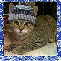 Adopt A Pet :: Camden - East Brunswick, NJ