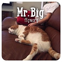 Adopt A Pet :: Mr. Big - Merrifield, VA