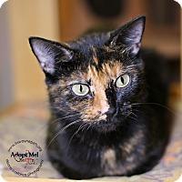 Adopt A Pet :: Amanda - Lyons, NY