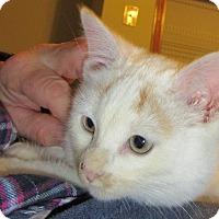 Adopt A Pet :: Dollar - Rochester, MN