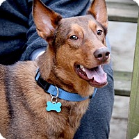 Adopt A Pet :: Declan - Suwanee, GA