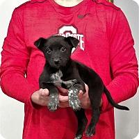 Adopt A Pet :: Rosco - New Philadelphia, OH