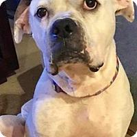 Adopt A Pet :: Emma - ROSENBERG, TX