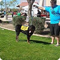 Adopt A Pet :: Yoshi - Gilbert, AZ
