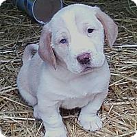 Adopt A Pet :: Megan - South Jersey, NJ