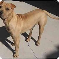 Adopt A Pet :: Pei Wei - Gilbert, AZ