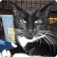 Adopt A Pet :: Sir Galahad - Riverside, RI