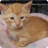 Adopt A Pet :: Mango - Acme, PA
