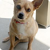 Adopt A Pet :: McKenna - Baton Rouge, LA