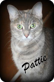 Domestic Shorthair Cat for adoption in Salem, Ohio - Pattie