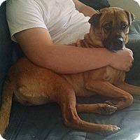 Adopt A Pet :: Kia - Hamilton, ON