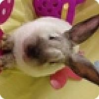 Adopt A Pet :: Soy Sauce - Paramount, CA