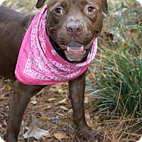 Adopt A Pet :: Twiggy - Snellville, GA