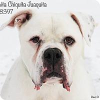 Adopt A Pet :: Juanita Chiquita - Troy, MI