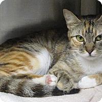 Adopt A Pet :: Tressy - Harrisburg, NC