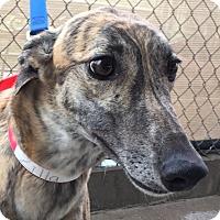 Adopt A Pet :: CRT Zilla - Longwood, FL